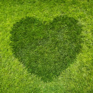 show your lawn some love