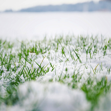 winter lawn tips