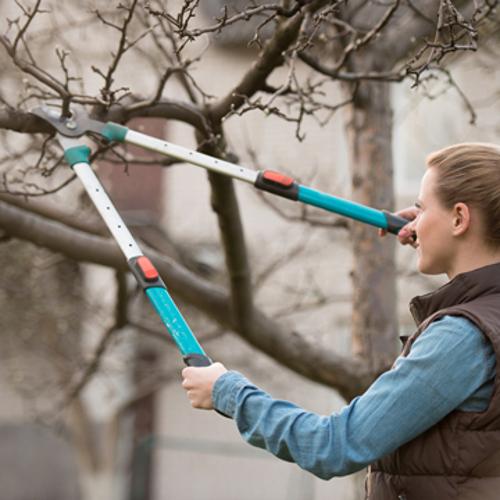 benefits of tree pruning
