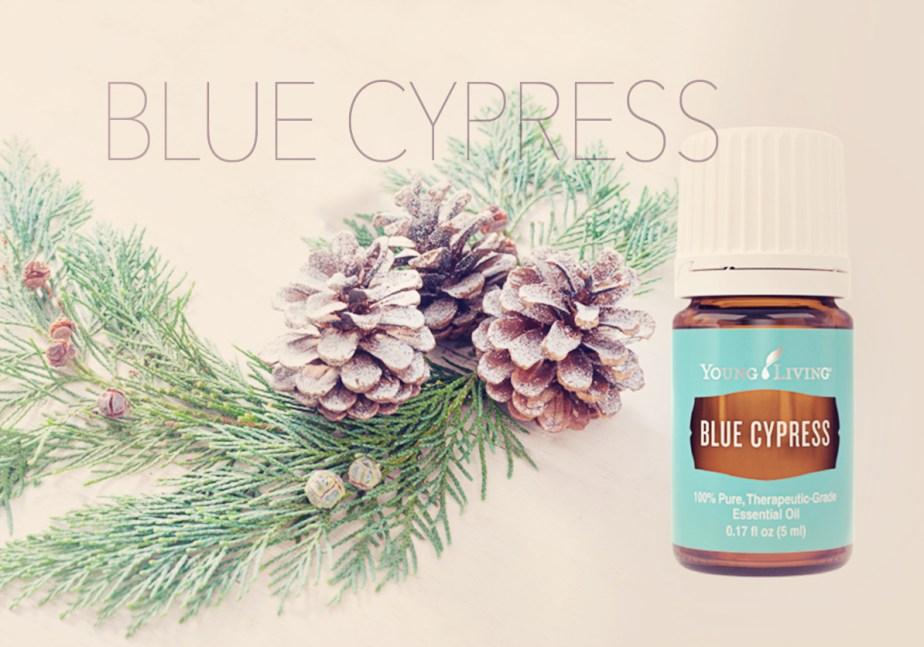 BLUE CYPRESS graphic