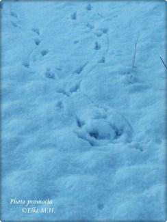 28-12-2015 Pippi Spuren