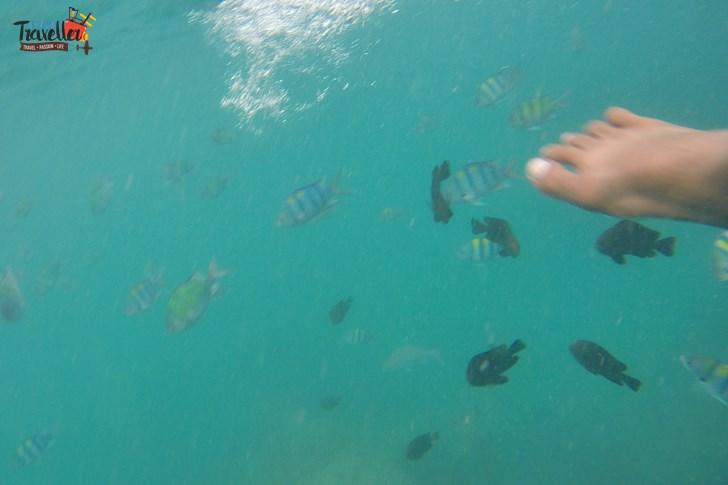 Island Hopping in Phuket - Underwater View - Snorkeling - Koh Phi Phi Island Hopping