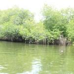 Sri Lanka Tour Itinerary - Madu River Boat Ride through Mangroves - View 2