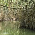 sri lanka tour itinerary - Madu River Boat Ride through Mangroves - View 3