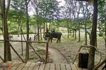 to do on Koh Lanta - Elephant Trek