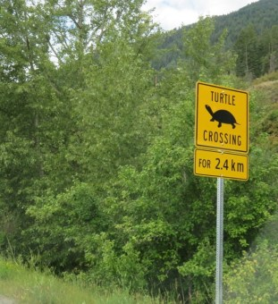 """""""Turtle Crossing"""" sign that greeted us on the road into the Creston Valley Wildlife Area (Photo © 2016 by V. Nesdoly)"""
