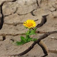 Life Quotes -- Let life happen... Rilke