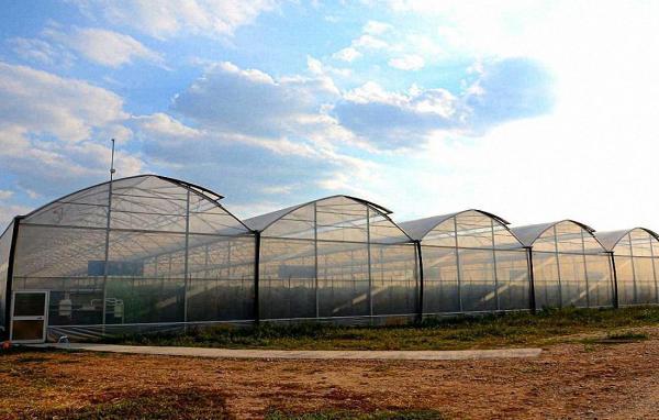 Многорядные высота 4,7 м. - промышленные и фермерские теплицы