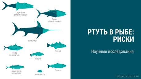 Ртуть в рыбе: риски. Научные исследования