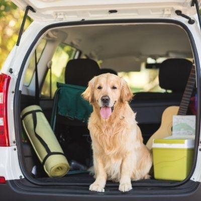 viaggiare con il tuo cane