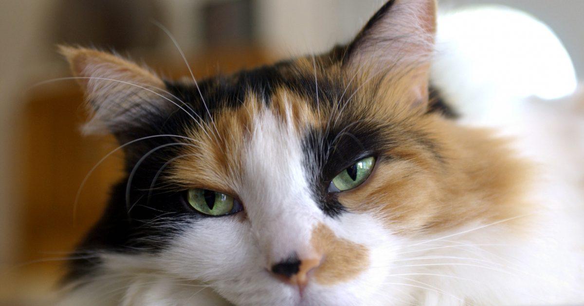 Gato Idoso – Cuidados especiais