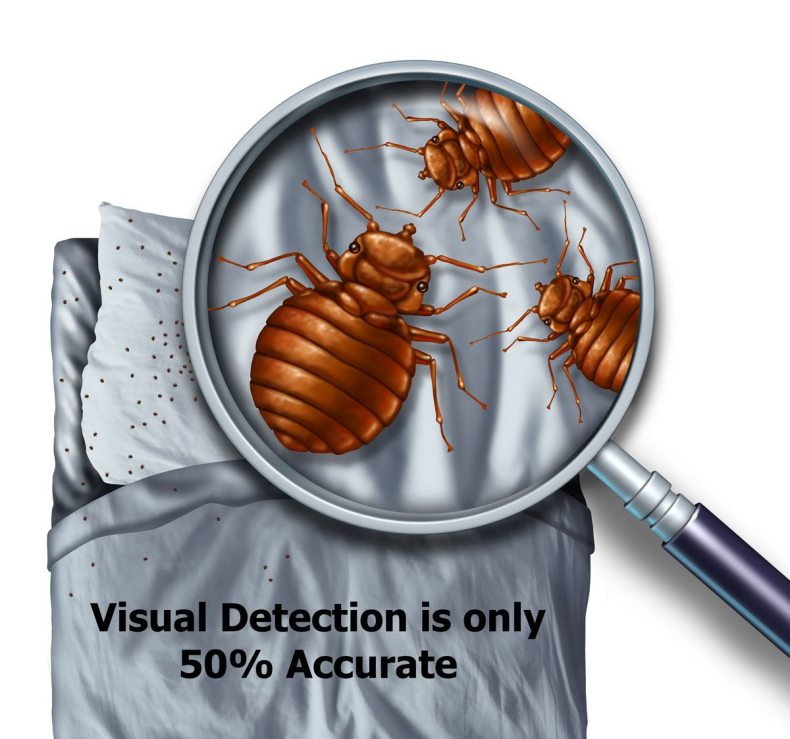 Visual Bed Bug detection is only 50% accurate