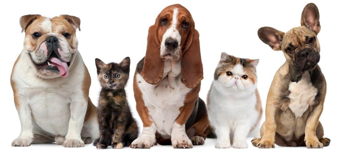 Eletrocardiograma para Cães