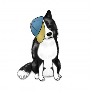Border Collie in a Baseball Cap