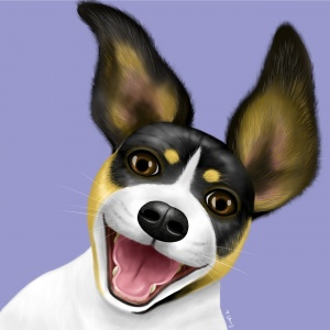 Rat Terrier, dog illustration, animal illustration, pet portraits