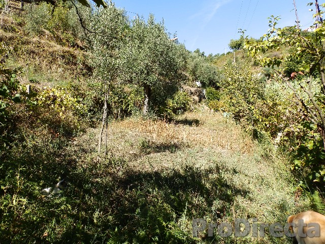 Small set of land with a house and land with barn Coja