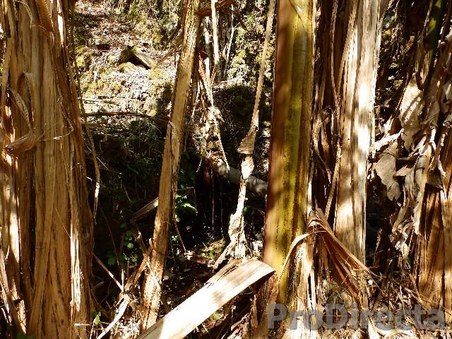 Arganil Quinta das Bananeiras