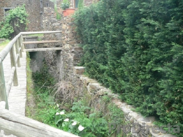 Front Side Hedge of Mature Leylandii Cyprus along the Ribeira (Brook)