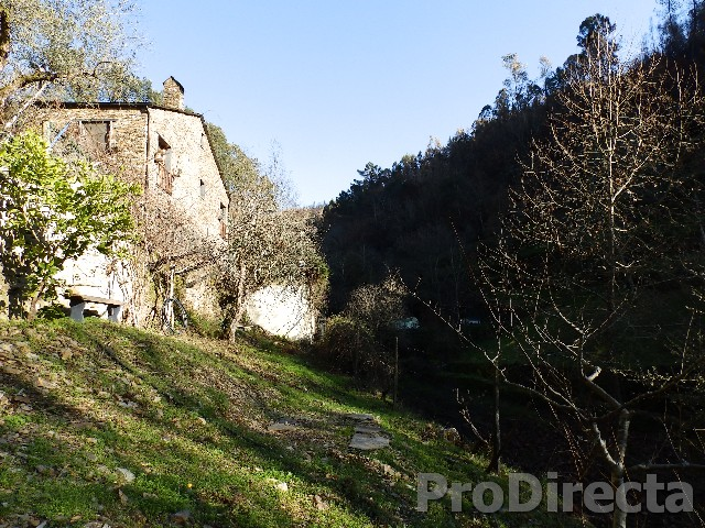 Farm in Arganil for sale