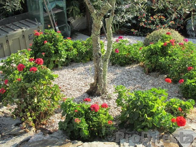 34. Garden
