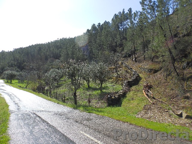 Land for sale central portugal