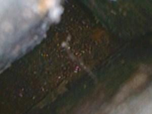 Borescope image of mold contamination.