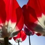 1 мая в Польше (по Франка)