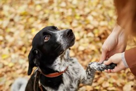 Фразеологизмы и пословицы о собаках на польском языке