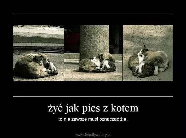 Żyć jak pies z kotem — жить как собака с кошкой