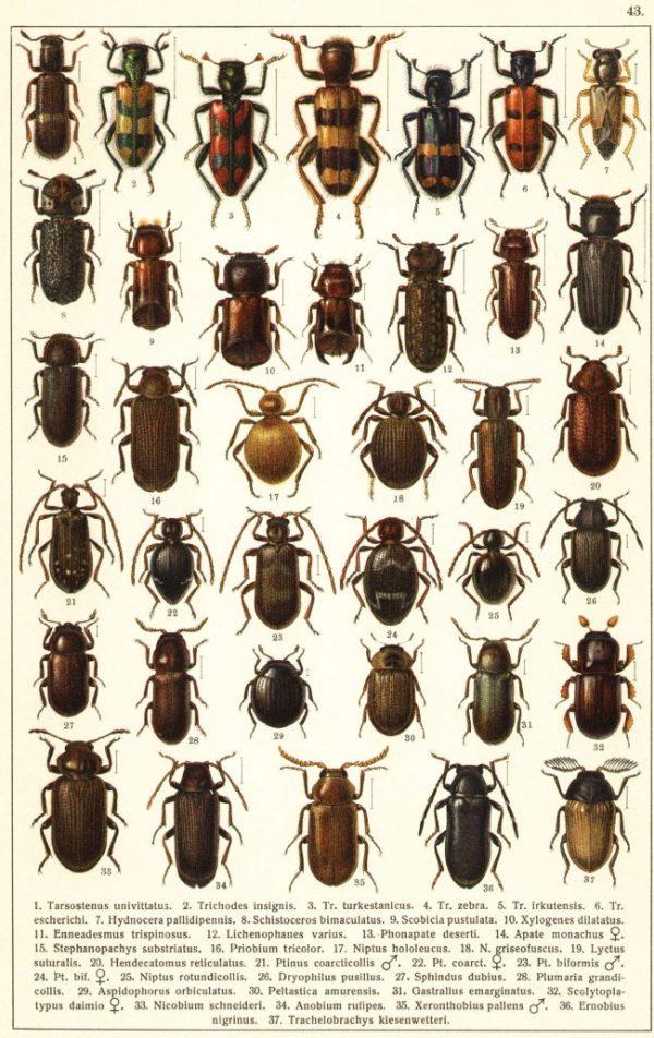 Картинки жуков с названиями (40 фото)