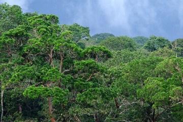 Ökosysteme