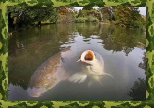 Cách chọn một nơi để bắt cá chép trên Macuha