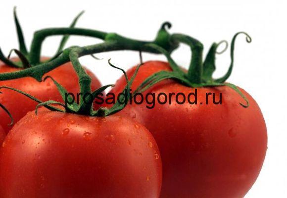 Помидоры Красная шапочка: описание сорта и выращивание ...