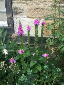 Prosecco and Pie visits Seaton Deleval Hall National Trust July 2015 (20)