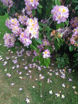 Prosecco and Pie visits Seaton Deleval Hall National Trust July 2015 (70)