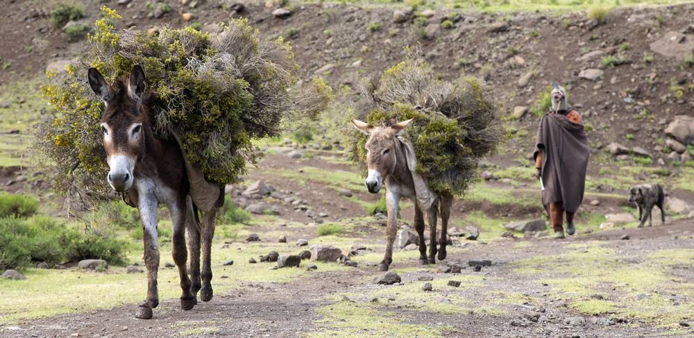 Donkeys Lesotho_travel photography