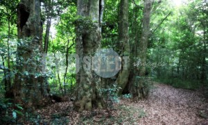 Dlinza Forest | ProSelect-images