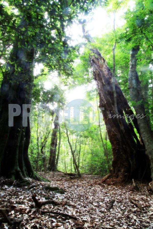 Eshowe Dlinza Forest | ProSelect-images