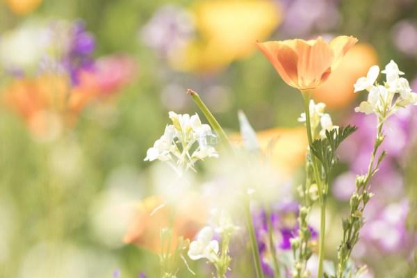 Bed of indigenous flowers in bloom