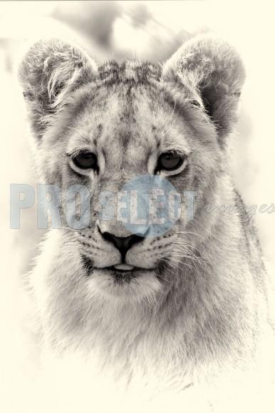 Lion cub portrait | ProSelect-images