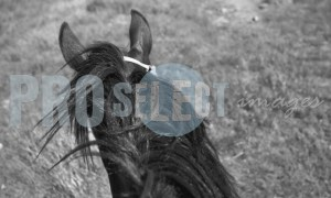 Argentina horse riding | ProSelect-images