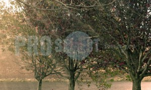 Bench under oak trees | ProSelect-images