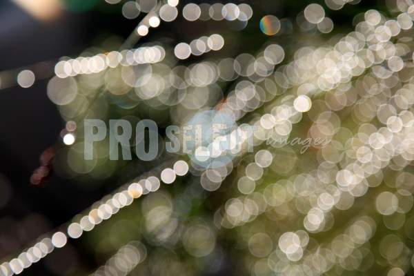Dewdrops on grass | ProSelect-images
