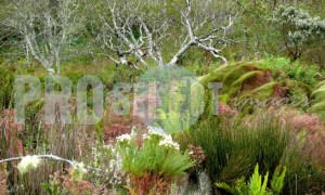 Fynbos variety | ProSelect-images