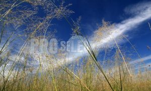 Grass and Clouds | ProSelect-images