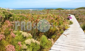 Hiking trail Table Mountain | ProSelect-images