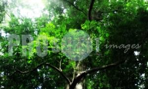 Indigenous forest Eshowe | ProSelect-images