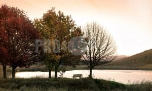 Oaks at dam Dullstroom | ProSelect-images
