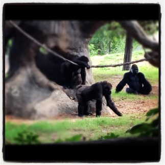Monkeying around at the Zoo