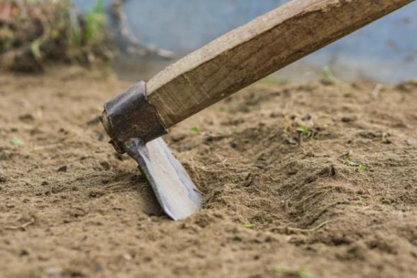 Как подготовить почву для посадки чеснока (весной, осенью ...